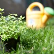 Plant in a pot on the grass — Stock Photo #13363980