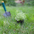 Plant in a pot on the grass — Stock Photo #13363982