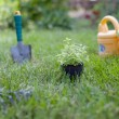 Plant in a pot on the grass — Stock Photo #13363986