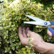 Cutting the bush — Stock Photo