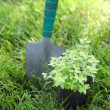 Stock Photo: Plant in a pot on the grass