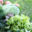 Vegetables in garden — Stock Photo