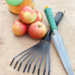Apples and garden tools - Stock Photo