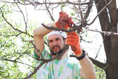 Rifilatura di alberi con cesoie — Foto Stock