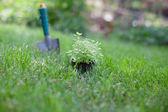 Plant in een pot op het gras — Stockfoto