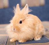 Rabbit on Textile — Stock Photo