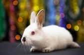 Rabbit against lights blurred background — Stock Photo