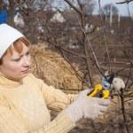 Hands with gloves of gardener doing maintenance work — Stock Photo #26810911