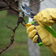 Hands with gloves of gardener doing maintenance work — Stock Photo