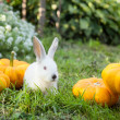 Stockfoto: Rabbit on grass