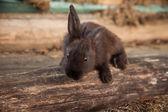 Rabbit bunny cute outdoors. — Stockfoto