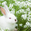 Rabbit on the grass — Stock Photo