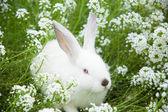 Rabbit on the grass — Stock Photo
