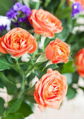 Red roses bouquet — Foto Stock