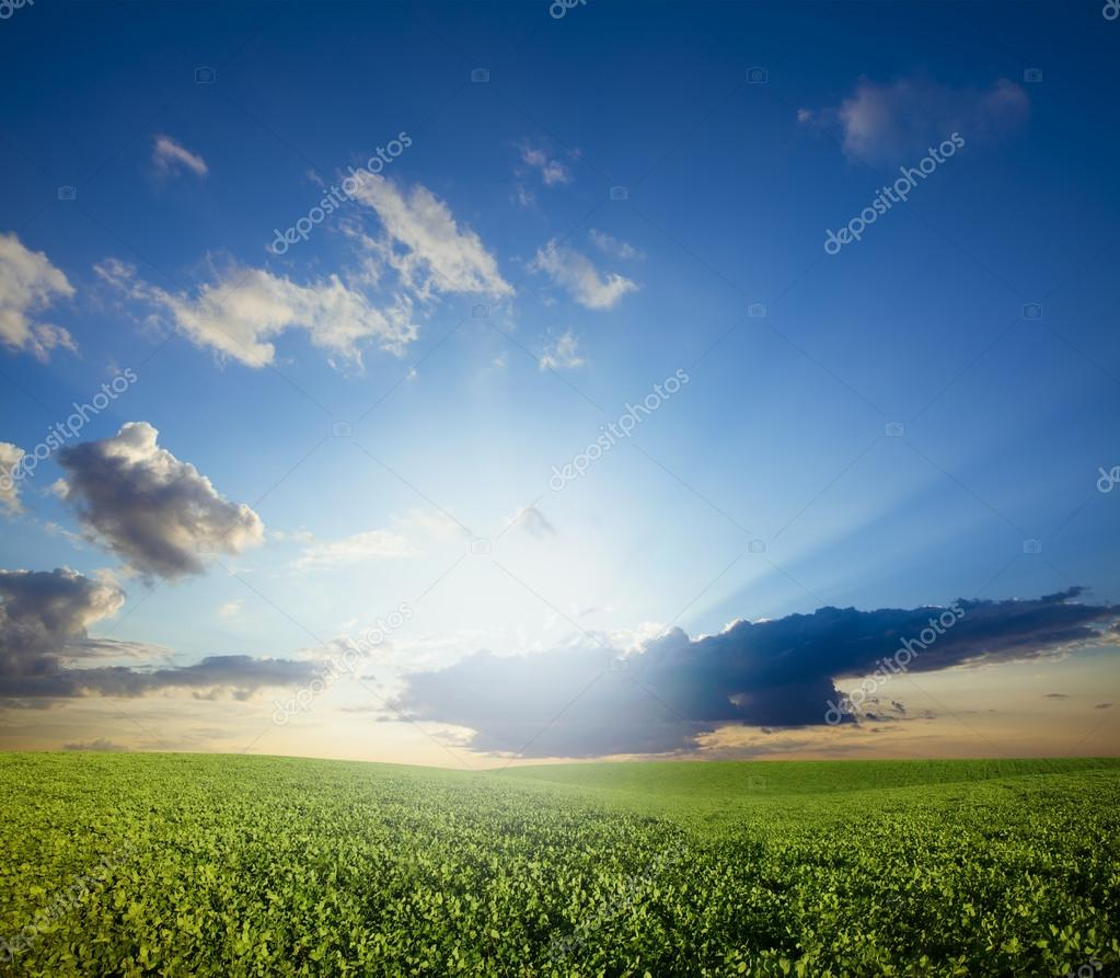Green meadow under blue sky with clouds  — Stock Photo #12357142