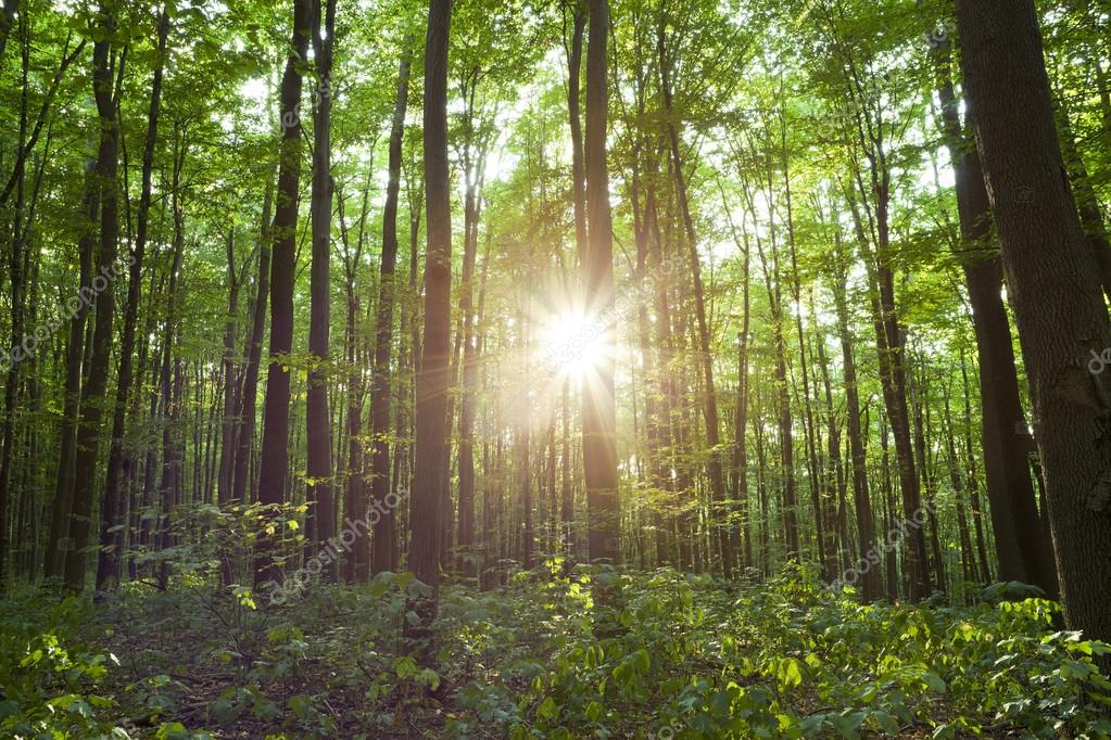 Sunshine in the green forest  — Stock Photo #12357589