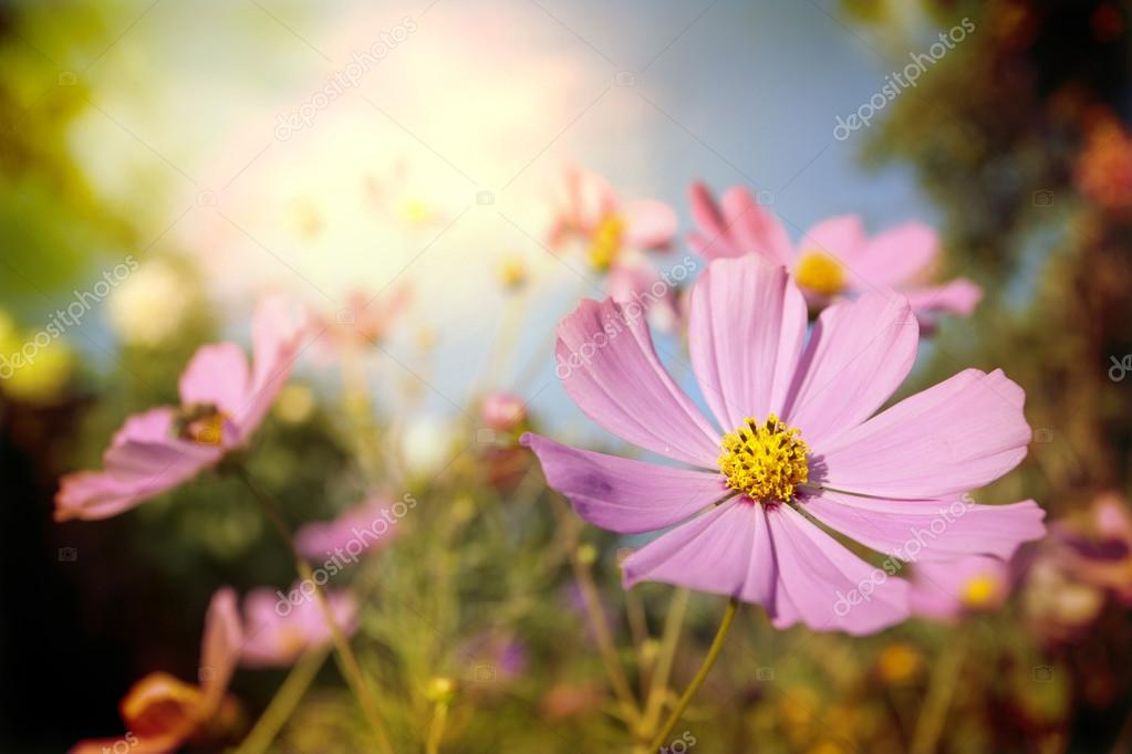 Field of flowers and sunlight   Stock Photo #13262731