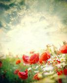 Flores papoulas — Foto Stock
