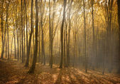 Lesa — Stock fotografie