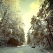Winter Forest — Stock Photo #19949427
