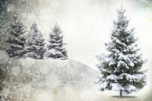 Frozen tree in snowy — Stockfoto