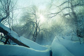 Forest in the snow — Stock Photo