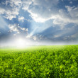 Green Landscape - Foto Stock