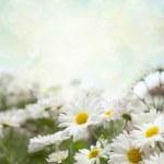 White flowers — Stock Photo #23306650
