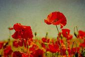 Grunge poppies — Stock Photo