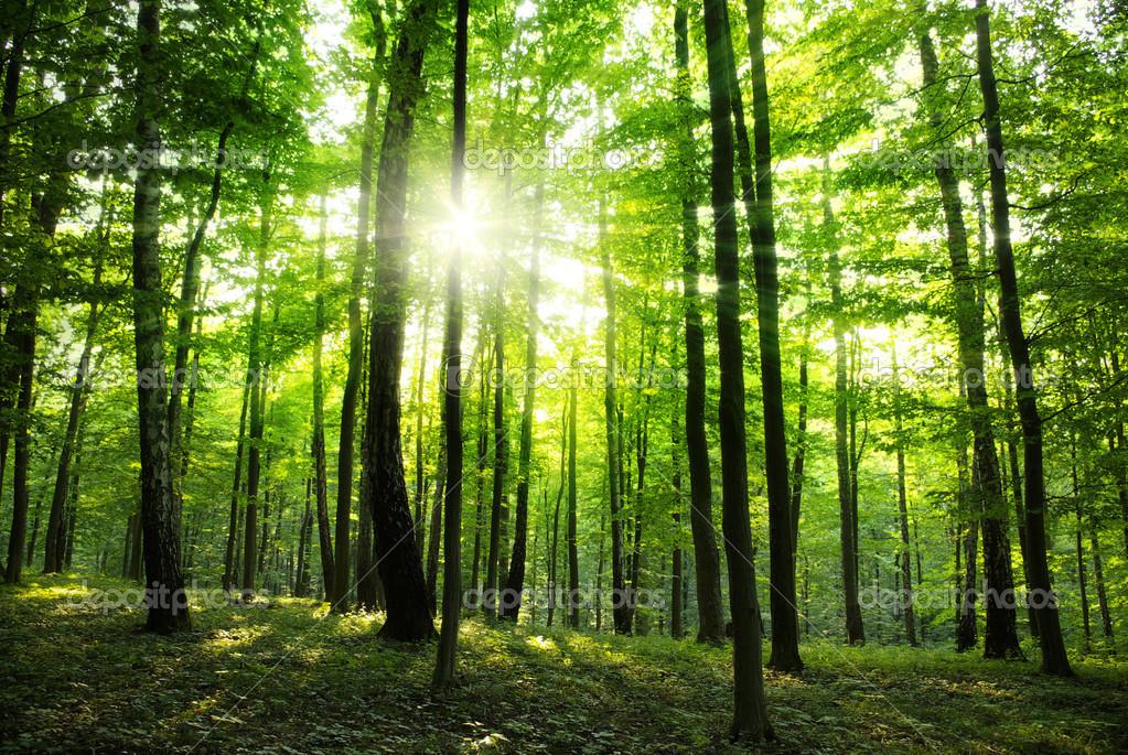 春天的树林风景高清图分享展示