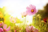 цветочное поле — Стоковое фото