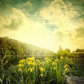 Krajobraz — Zdjęcie stockowe