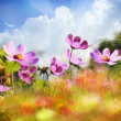 Field of flowers — Stock Photo #31318453