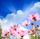 Fält av blommor — Stockfoto