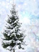 Christmas tree in snow — Stock Photo
