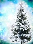 Noel ağacı karda — Stok fotoğraf