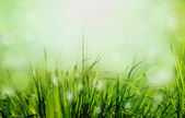 Abstract nature background — Stock Photo