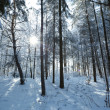 Winter forest — Stock Photo #40233465