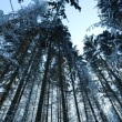Winter forest — Stock Photo #40233819