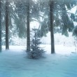 Winter forest — Stock Photo #40237251