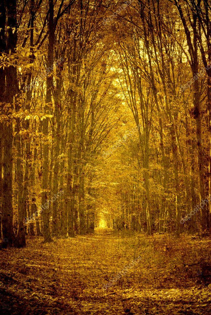 壁纸 风景 森林 桌面 685_1023 竖版 竖屏 手机