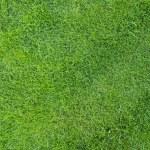 Green texture — Stock Photo #8935779