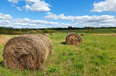 Hay on field under blue sky in summer day — Stock Photo