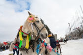 Horse at winter holiday in Samara, Russia — Stock Photo