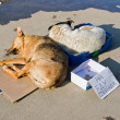 Stock Photo: Stray dogs sleeping on ground