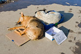 Stray dogs sleeping on the ground — Stock Photo