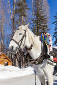 Horse in the winter park in Samara, Russia — Stock Photo