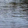 Stock Video: Water surface background