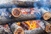 Burning firewood in the fire closeup — Stock Photo