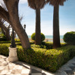 Palm trees and conifers in Cadiz — ストック写真